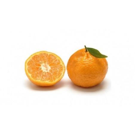 Mandarini Siciliani